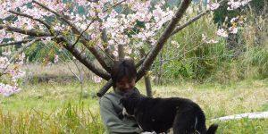 伊比井、桜の木の下で、飼い犬と
