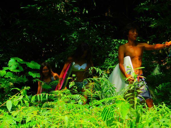林の中を歩いていく